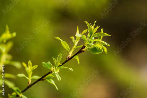 Fototapety, obrazy: first spring sprouts