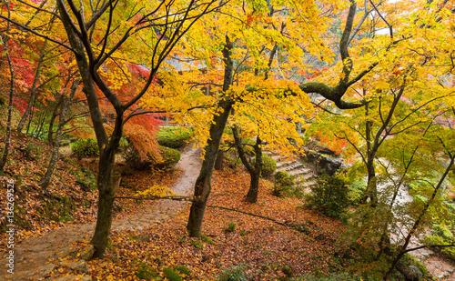 Tuinposter Weg in bos Japanese garden with maple tree