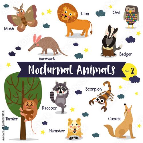 Nocturnal Animals Uitleg Einde on Nocturnal Animal Themed Posters