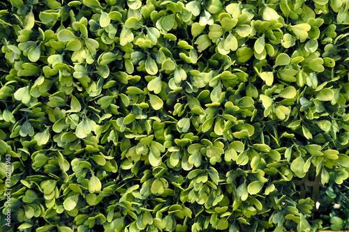 Tableau sur Toile green bush