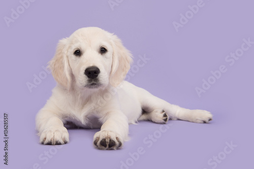 Photo  Cute golden retriever puppy lying on the floor facing and leaning towards the ca