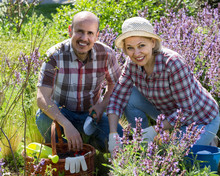 Portrait Of A Lovely Senior Couple Taking Care Of Green Plants I