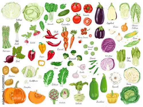 Fototapeta Big set of colored vegetables obraz