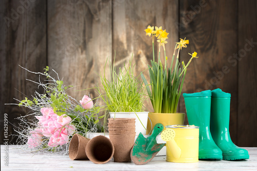 Türaufkleber Narzisse Garden tolls and spring seedling on wooden background. Rubber, narcis and tulips.
