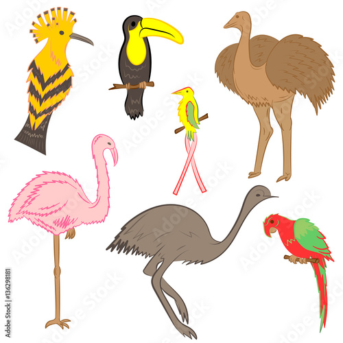 Canvas Prints Flamingo Bird Colorful Hand Drawn Exotic Tropical Birds. Doodle Drawings of Parrot, Ostrich, Emu, Hummingbird, Hoopoe and Toucan. Flat Style. Vector Illustration.