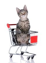 Cute Tabby Kitten In Shopping Trolley On White Background
