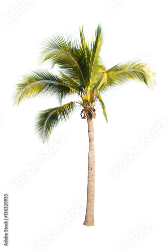 Coconut trees on white background   Wall mural