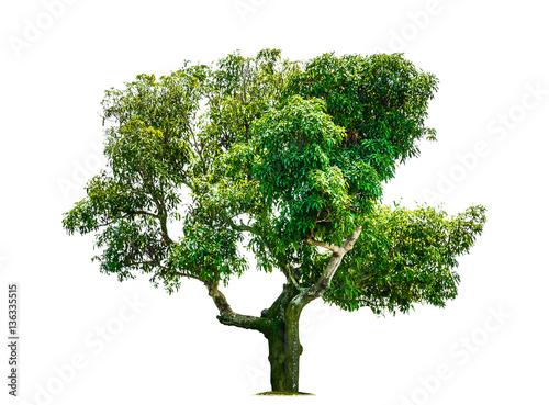 Fotografia, Obraz  tree isolated