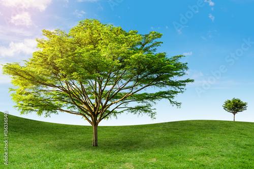 drzewo-na-trawie-background-sky-daytime