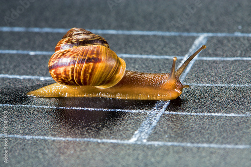 Snail on the athletic track