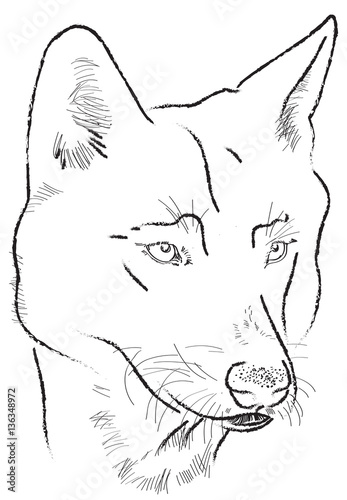 wolf - darawing on tablet