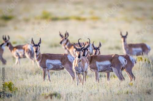 In de dag Antilope Antelope herd