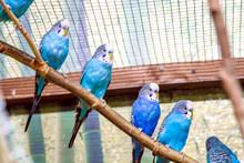 Blue Parrots Sitting On A Bran...