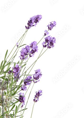Montage in der Fensternische Lavendel Lavande