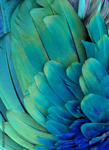Türaufkleber Makrofotografie Macro photograph of the green and blue feathers of a macaw.