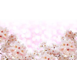 Fototapeta桜と春色の背景