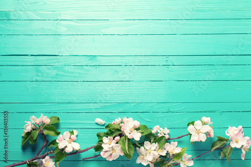 Spring border - apple tree flowers on  bright turquoise  wooden