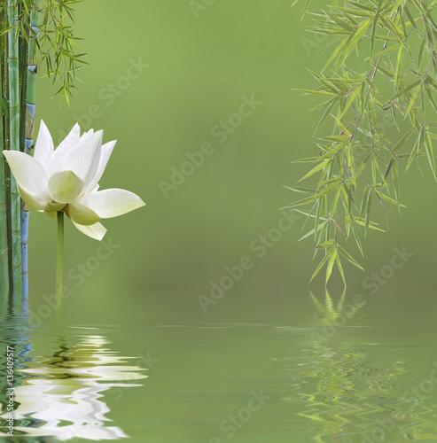 Poster Waterlelies composition zen aquatique, bambous et fleur de lotus