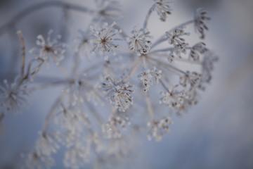 Fototapeta Inspiracje na zimę Widoki w zimie