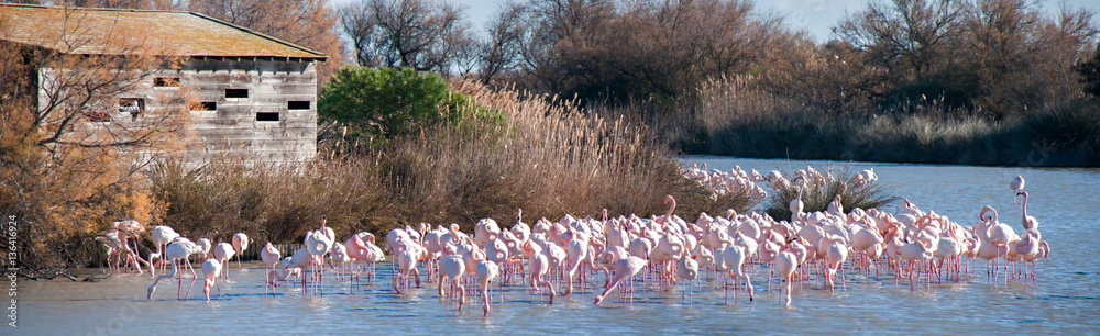 Flamants roses devant poste d'observation