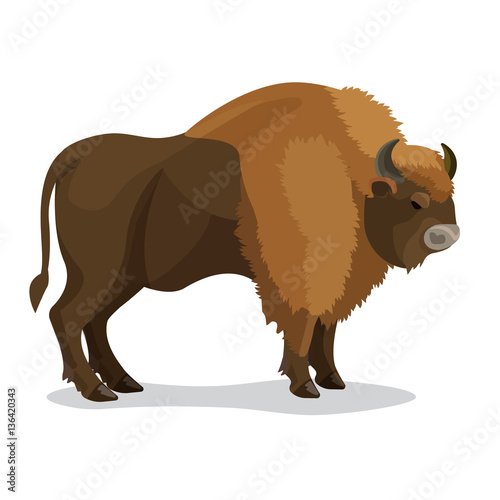 Obraz na plátně  Aurochs animal in brown colour with horns isolated on white