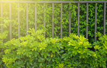 Fence Of Residential House Modern Style,Metal Fence
