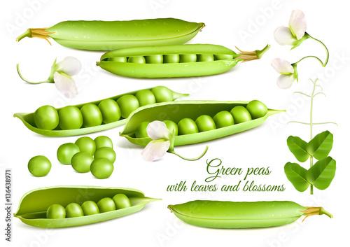 Carta da parati Collection of vector illustrations green peas