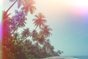 Fototapeta Relaks i kontemplacja Empty remote tropical beach with exotic coconut palm trees vintage color stylized with film flare light leaks