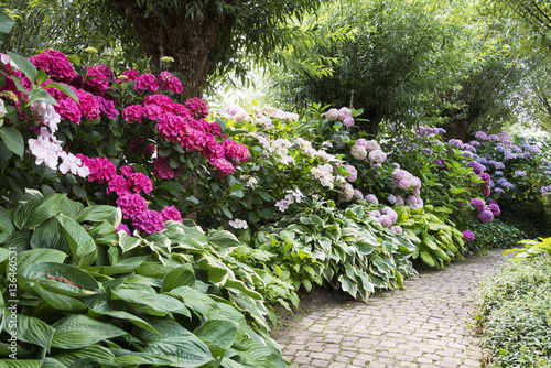 Poster Jardin rhododendrons in english garden