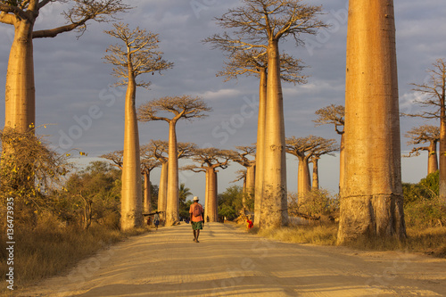 In de dag Baobab Baobab Alley in Madagascar, Africa. Beautiful and colourful land