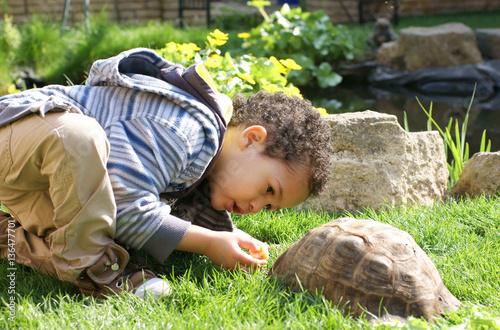 Poster Tortue little boy lovingly feeding his tortoise