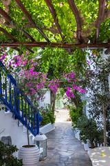Fototapeta Uliczki Colourful Mykonos