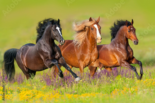 Horses run gallop in flower meadow