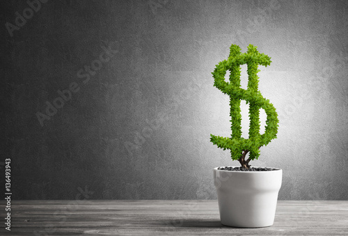 Valokuva  Concept of investment income and growth with money tree in pot
