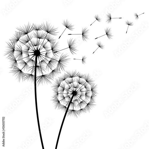 dwa-kwiaty-dandelions-sylwetka