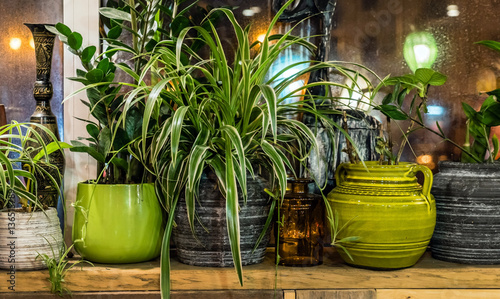 Foto op Canvas Planten house plants