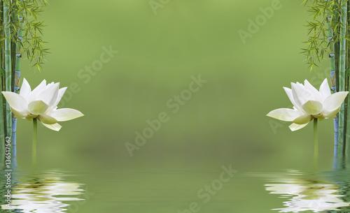 Poster Waterlelies composition zen aquatique, bambou et fleur de lotus