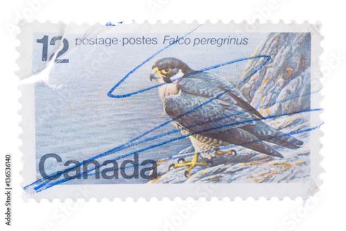 Fotografía  Milan, Italy - January 08, 2014: Peregrine falcon on a canadian