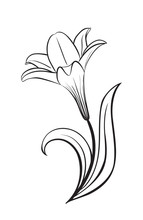 Lily Flower Vector Icon