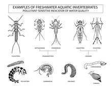 Examples Of Aquatic Invertebrates, Water Quality Indicators