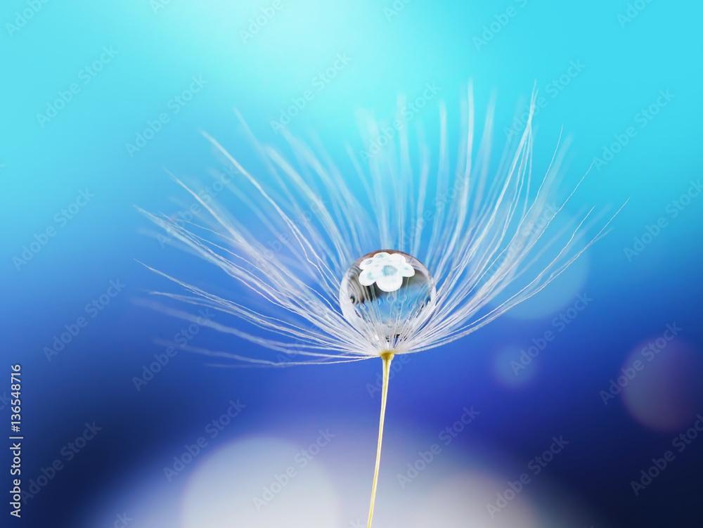 Fototapety, obrazy: Krople rosy na mniszku lekarskim na niebieskim tle