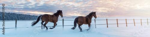 Fotografía  Panorama zwei Pferde - Westfalen - laufen im Schnee in den Sonnenuntergang
