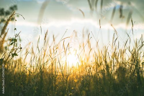 Fotobehang Gras Fresh morning dew on spring grass, natural background