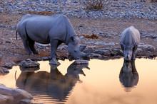 Rhinoceros Drinking In Etosha ...