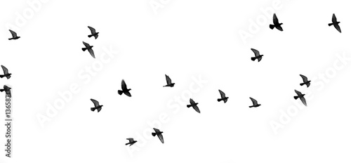 Montage in der Fensternische Vogel flock of pigeons on a white background