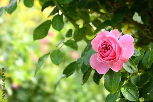 Fotobehang Zwavel geel Blumen 759