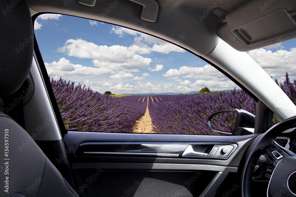 Fototapety, obrazy: Panorama di un campo di lavanda visto dall'interno dell'abitacolo un automobile