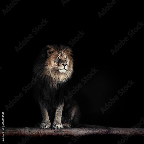 Recess Fitting Lion Portrait of a Beautiful lion, lion in dark