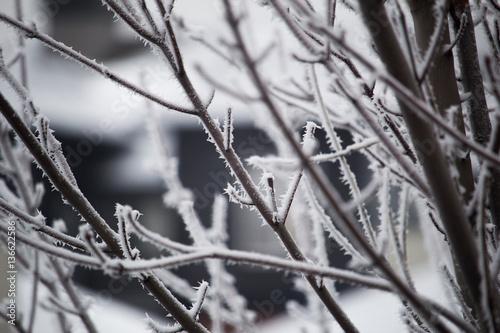 Staande foto Paardebloemen en water Frost