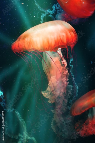 Magical Orange Jellyfish